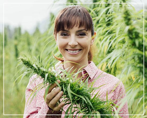 Co to jest No1 Cannabis CBD?Stostowanie i skład